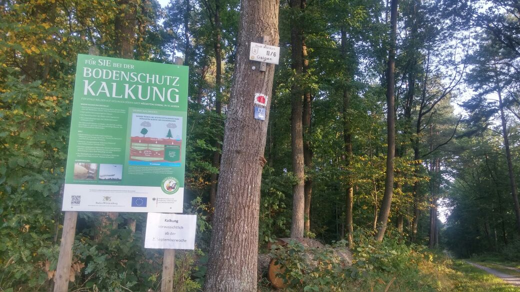Kalkung im Walldürner Forst