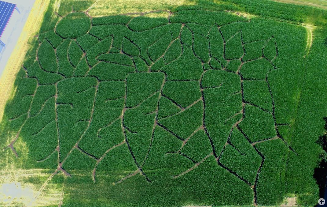 Luftaufnahme des Maislabyrinths des Bauernhofes Stolz im Jahr 2019