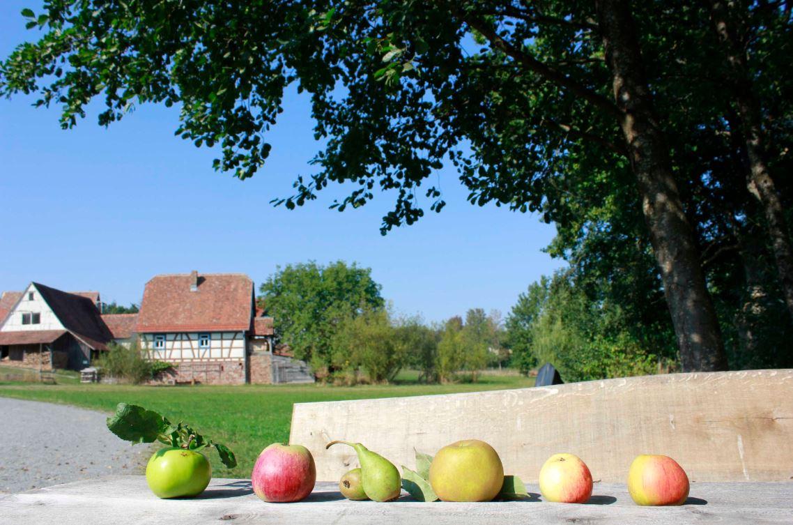 FLM Äpfel und Birnen