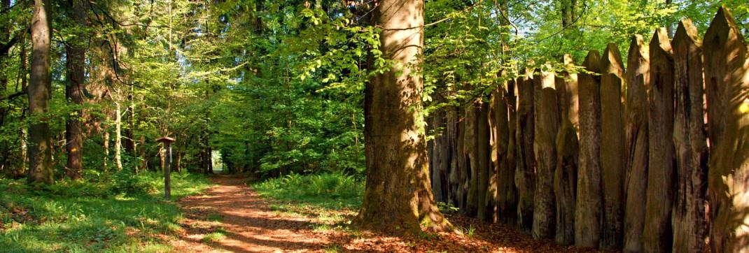 Nachgebildete Holzpalisaden entlang des Limes im Walldürner Stadtwald.