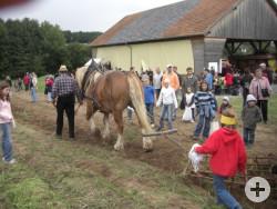Freilandmuseum_Kartoffelfest8